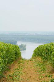 Quet Vineyard